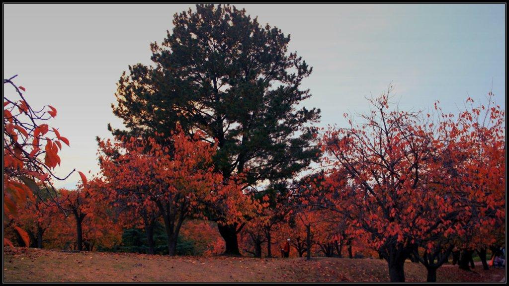 Warna Musim Gugur Menuju Bulguksa Temple
