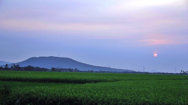 Paddy field in Sunset