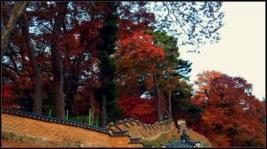 Pepohonan dengan warna musim gugur di latar belakang