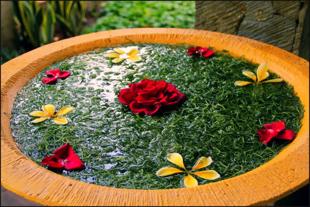 Afloat flowers in Bali
