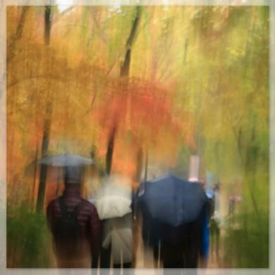 Rain in the Secret Garden, Seoul