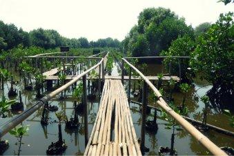 Lokasi-lokasi penanaman bakau
