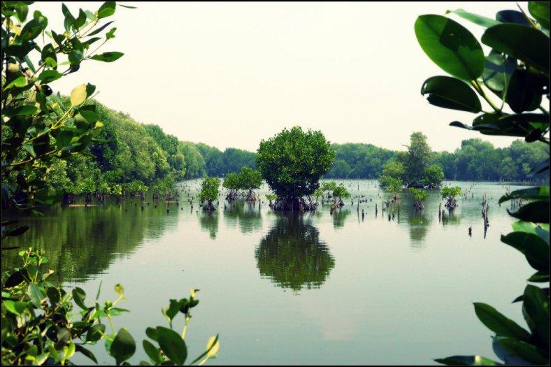 Yang Indah dari Wisata Alam Mangrove
