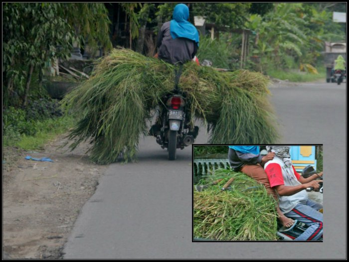 A brave farmer on a motorbike