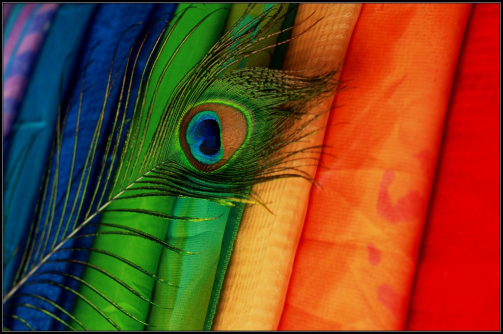 A Peacock Feather on ROYGBIV