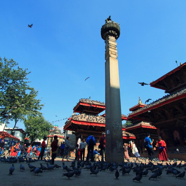 Pigeons and the King Column
