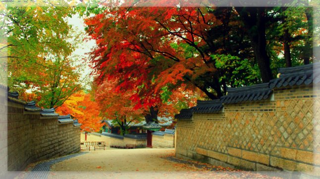Autumn in Secret Garden, Changdeokgung, Seoul