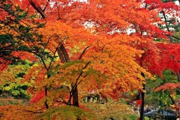 Leaves in Transition, Secret Garden, Seoul