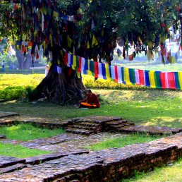 A Monk under a Boddhi Tree