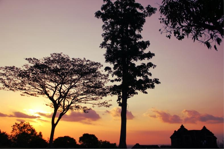 Trees and Ratu Boko Temple, Jogja