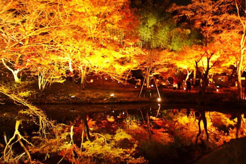 Reflection in Kodaiji Temple, Kyoto