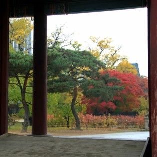 Autumn view from the gate