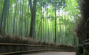 Bamboo groves, Arashiyama, Japan