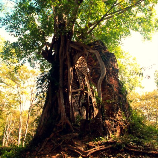 A tree and ancient building, Sambor Prei Kuk