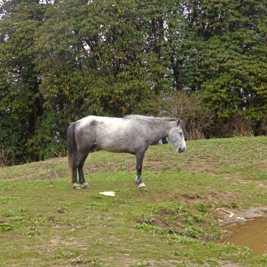 A Horse in tranquility