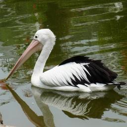 Another aquabird