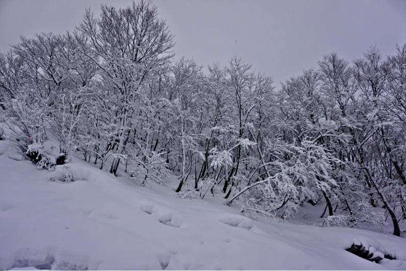 The trees in Gala Yuzawa