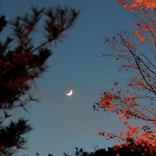 moonrise at one perfect autumn in Kyoto