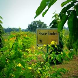 Peace Garden, Lumbini, Nepal