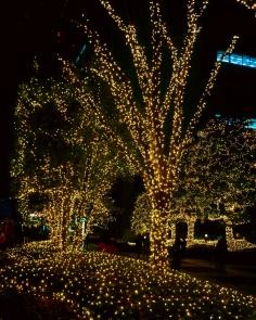 Shinjuku around Christmas