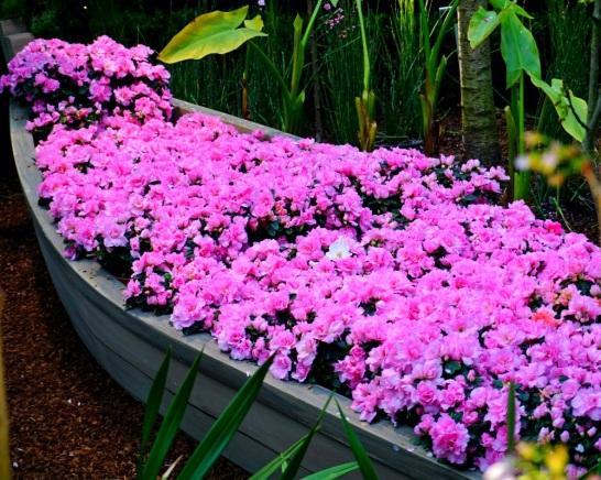 A Boat of Sakura