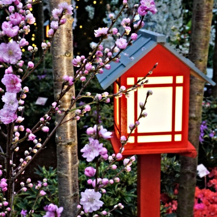 Sakura and House Lantern