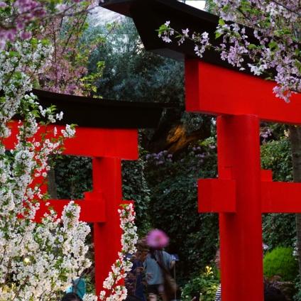 Sakura and Torii